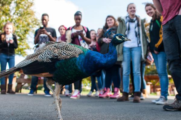 Trip to Dublin Zoo 2014